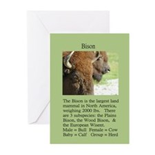 """Wildlife Definition"" Bison Face Cards (Pk of 10)"