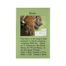 """Wildlife Definition"" Bison Face Magnet"