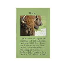 """""""Wildlife Definition"""" Bison Face Magnet"""