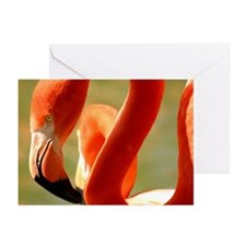 Flamingo Flair Greeting Cards (Pk of 10)
