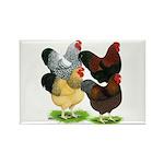 Wyandotte Rooster Assortment Rectangle Magnet (100