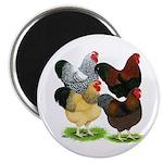 Wyandotte Rooster Assortment Magnet