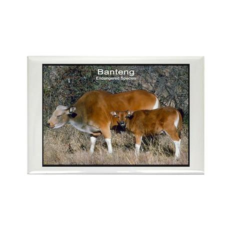Banteng Wild Cattle Photo Rectangle Magnet
