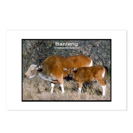 Banteng Wild Cattle Photo Postcards (Package of 8)