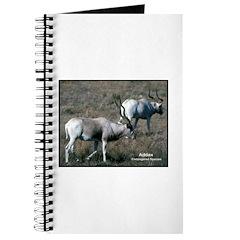 Addax Antelope Photo Journal