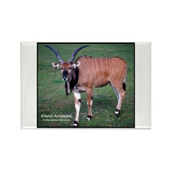 Eland Antelope Photo Rectangle Magnet (10 pack)