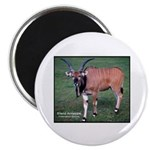 Eland Antelope Photo Magnet