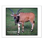 Eland Antelope Photo Small Poster