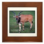 Eland Antelope Photo Framed Tile