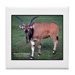 Eland Antelope Photo Tile Coaster