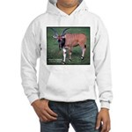 Eland Antelope Photo Hooded Sweatshirt