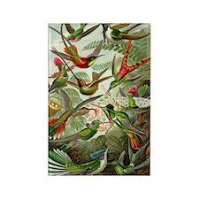 Hummingbirds Rectangle Magnet