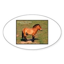 Mongolian Wild Horse Photo Oval Decal