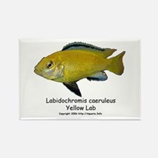 Labidochromis caeruleus Rectangle Magnet