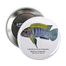 Labidochromis kimpuma Button