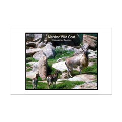 Markhor Wild Goat Photo Posters