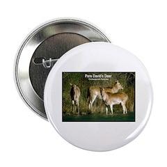 Pere David's Deer Photo Button