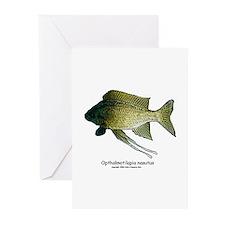 Opthalmotilapia nasutus (Feat Greeting Cards (Pack