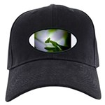 Praying Mantis Black Cap