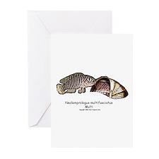 Neolamprologus Multifasciatus Greeting Cards (Pack