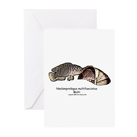 Neolamprologus Multifasciatus Greeting Cards (Pack