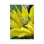 Praying Mantis Mini Poster Print
