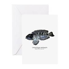 Lamprologus meleagris Greeting Cards (Pk of 10