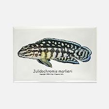 Julidochromis marlieri Rectangle Magnet