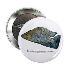Haplochromis compressiceps Al Button