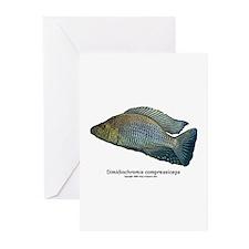 Haplochromis compressiceps Al Greeting Cards (Pack