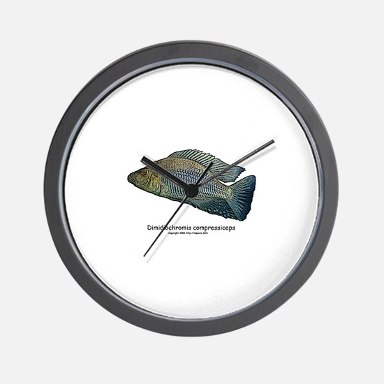 Haplochromis compressiceps Al Wall Clock