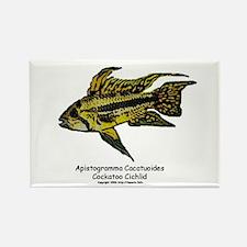 Apistogramma cacatuoides (Coc Rectangle Magnet