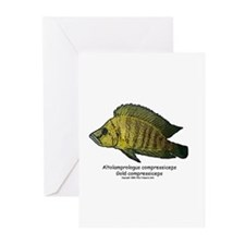 Altolamprologus compressiceps Greeting Cards (Pack