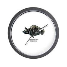 Altolamprologus calvus Wall Clock