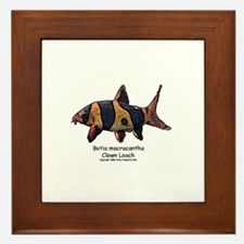 Botia macracantha (Clown Loac Framed Tile