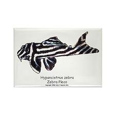 Hypancistrus zebra (Zebra Ple Rectangle Magnet
