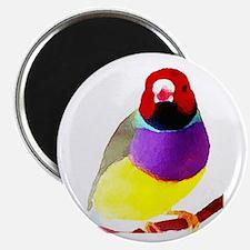 Gouldian Finch Magnet