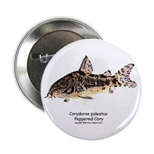 Corydoras paleatus (Cory Cat) Button