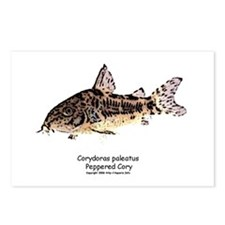 Corydoras paleatus (Cory Cat) Postcards (Package o