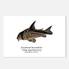 Corydoras leucomelas (Cory Ca Postcards (Package o