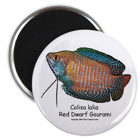 Colisa lalia (red dwarf goura Magnet