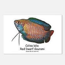 Colisa lalia (red dwarf goura Postcards (Package o