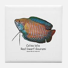 Colisa lalia (red dwarf goura Tile Coaster