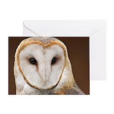 AUSTRALIAN MASKED OWL Greeting Card