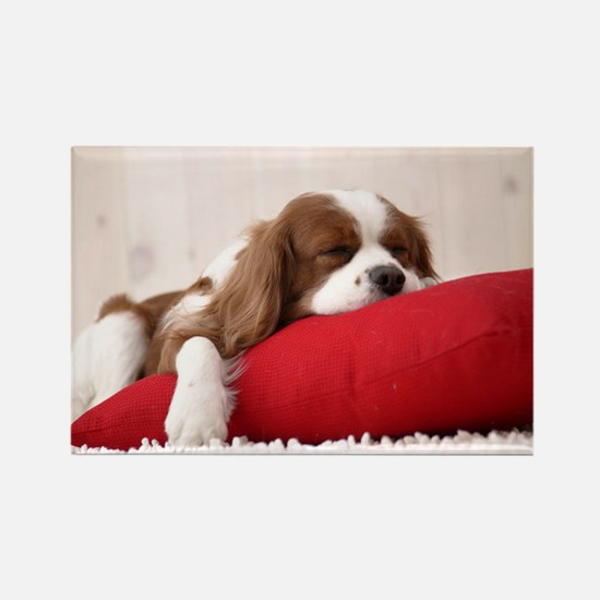 SLEEPING SPANIEL PUPPY Rectangle Magnet