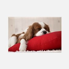 SLEEPING SPANIEL PUPPY Rectangle Magnet (100 pack)