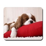 King charles spaniel Mouse Pads