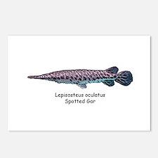 Lepisosteus oculatus Postcards (Package of 8)
