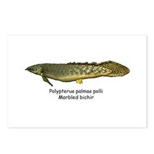 Polypterus palmas polli Postcards (Package of 8)