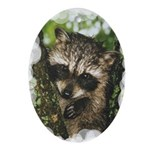 Baby Raccoon Ornament (Oval)